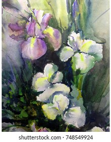 watercolor art background floral flowers bouquet iris white  yellow violet delicate bright wet wash textured  decoration  nature handmade beautiful colorful romantic garden wedding