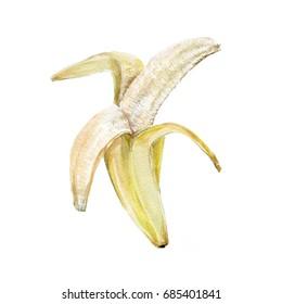 Watercolor Banana. Hand Drawn Illustration Organic Food Vegetarian Ingredient