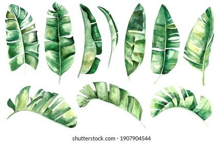 Aquarellbanane, tropische Blätter, Set-Illustration einzeln