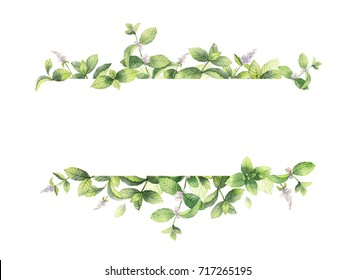 Watercolor banner of mint branches isolated on white background. Floral illustration for design greeting cards, wedding invitations, natural cosmetics, packaging and tea.