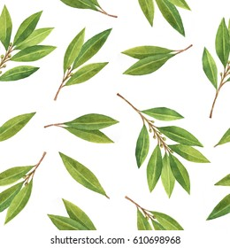 Watercolor Bay leaf seamless pattern of flowers and leaves isolated on white background. Organic products for the design of healthy food, kitchen, market, menu, textiles.