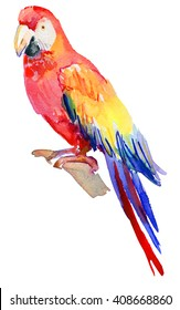 Watercolor Bird. Colorful macaws isolated in white background,