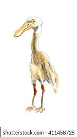 Watercolor bird illustration. Hand painted bird.