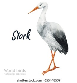 Watercolor bird of isolated illustration on a white background. Natural wildlife collection. Stork