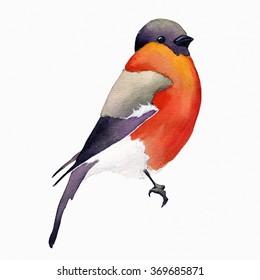 Watercolor bird.Invitation card with bright watercolor bird. Watercolor wildlife natural winter Christmas robin bird. Watercolor painted bird