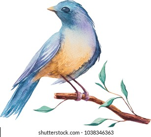 Watercolor birds. Hand painted illustration isolated on white background