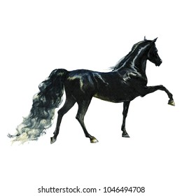 Watercolor black horse. Hand drawn beautiful prancing arabian, mustang,  thoroughbred stallion on white background. Painting animal illustration