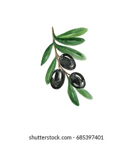 Watercolor Black Olives. Hand Drawn Illustration Organic Food Vegetarian Ingredient