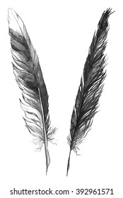 Watercolor black and white monochrome feather set isolated