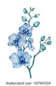 Watercolor blue orchid bouquet on white background.