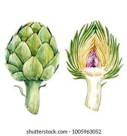 Watercolor Botanical illustration of a vegetable artichoke, vegetarian set menu