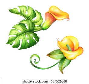 watercolor botanical illustration, wild yellow tropical flowers, jungle green leaves, floral design elements, calla lily, clip art isolated on white background