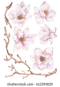 Watercolor branches of magnolia,beautiful flowers over white, collection for your art