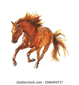 Watercolor brown horse runs galloping. Hand drawn beautiful arabian, mustang,  thoroughbred stallion on white background. Painting animal illustration