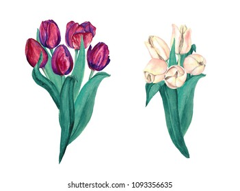Watercolor Burgundy and Cream Tulips Bouquets. Elegant marsala and off-white flowers composition of tulips.