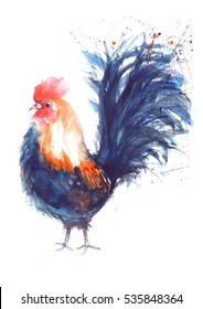 Watercolor chicken rooster illustration