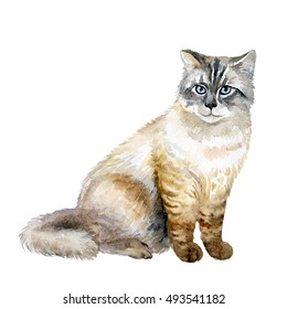 Watercolor close up portrait of popular Siberian longhair cat breed isolated on white background. Siberian forest cat with blue eyes sitting. Hand drawn pet. Greeting card design. Graphic clip art
