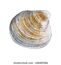 Watercolor colored shell on a white background