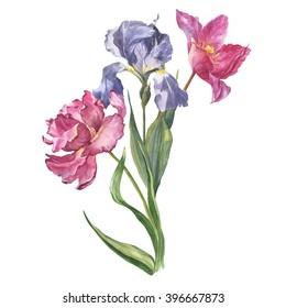 Mazzo Di Fiori Iris.Mazzo Di Fiori Images Stock Photos Vectors Shutterstock
