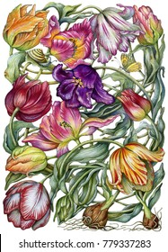 Watercolor colorful tulips.