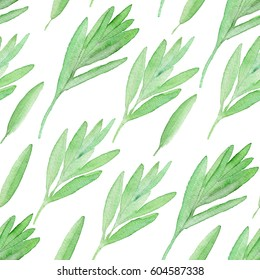 Watercolor culinary herbs seamless pattern. Hand painted illustrations of sage. Perfect for restaurant menu, cookbook, culinary blog, home decoration or packaging.