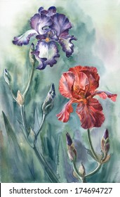 Watercolor: dance of two irises
