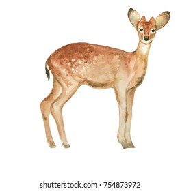 Watercolor deer hand drawn illustration on white background