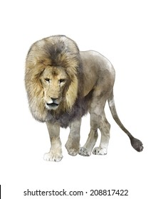 Watercolor Digital Painting Of Walking Lion Isolated On White Background