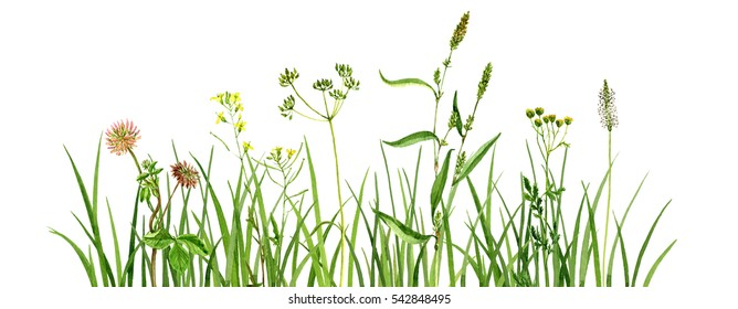 Watercolor drawing green grass and flowers,painted wild plants, decorative herbal border, floral background, hand drawn natural template