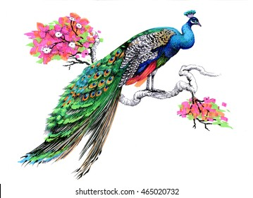 Peacock Drawing Images Stock Photos Amp Vectors