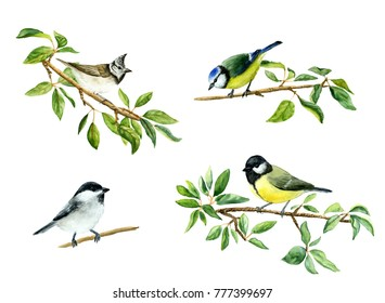 Watercolor drawing of tit birds on apple tree