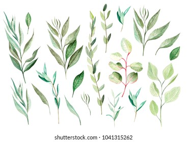 Watercolor eucalyptus set. Hand painted eucalyptus elements. Floral illustration  isolated on white background. For design and textile.