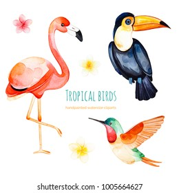 Watercolor exotic birds collection.Texture with toucan, flamingo,hummingbird and plumeria flowers.Perfect for wedding,invitations,greeting cards,quotes,pattern,bouquet,logos,Birthday cards,wallpapers