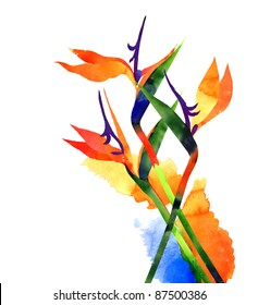 Watercolor exotic  tropical flower, strelitzia on white background