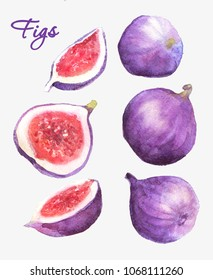 Watercolor figs set.Handdrawn illustration