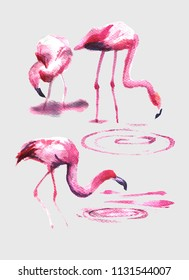 Watercolor flamingo art. Isoleted exotic bird