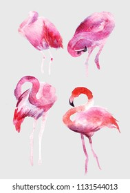Watercolor flamingo illustration. Beautiful tropical bird