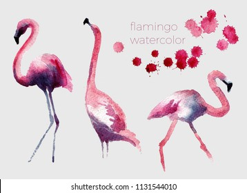 Watercolor flamingo set. Cute handdrawn illustration
