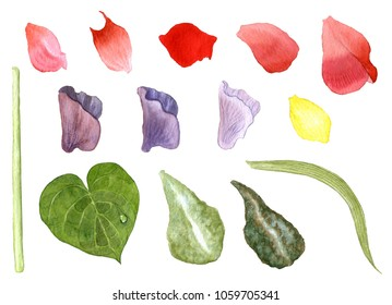 Watercolor flower elements set. Different types of petals, buds, leaves and stem of a plant