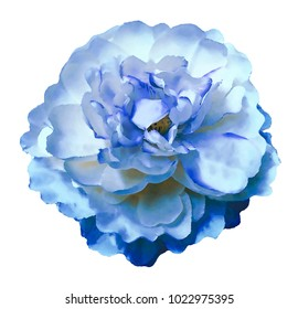 Watercolor  flower peony  white-blue on a white isolated background with clipping path. Nature. Closeup no shadows. Garden flower.