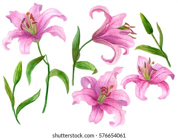 Watercolor flower set, hand drawn illustration of lilies, bright floral elements isolated on white background.