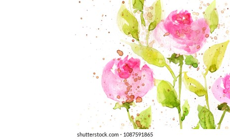 watercolor flowers on white background, illustration