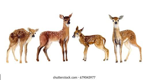 Deer Images Stock Photos Amp Vectors Shutterstock