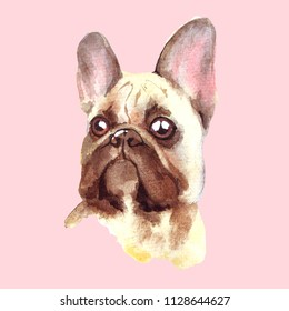 Watercolor french bulldog. Cute handdrawn illustration