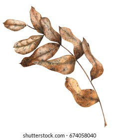 Watercolor Hand Drawn Dry Autumn Leaves