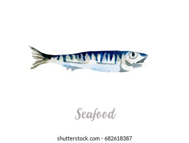 Watercolor hand drawn fish. Isolated fresh seafood illustration on white background