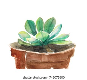Watercolor hand drawn illustration of succulent in a pot isolated on white