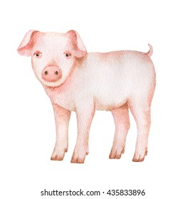 Watercolor hand drawn pig on a white background. Illustration for your design.