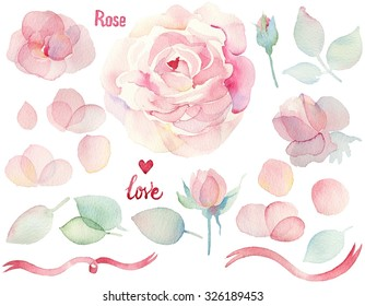 Watercolor hand drawn roses. English roses. Set of flowers traditional drawing and painting by watercolor on white background.