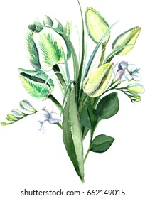 Watercolor hand drawn white and green parrot tulips, freesia, lilly foliage bouquet. Decorative floral composition for wedding design. White and green elegance.